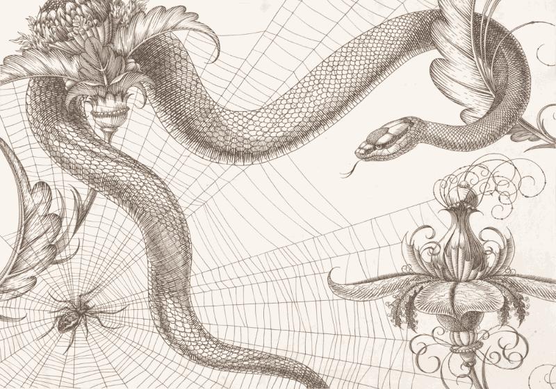 pająk sięć wąż